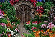 Garden / by Jess T