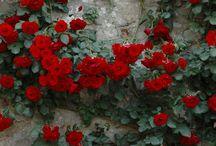 Idee per il giardino che vorrei / Gardens, balconies, terraces