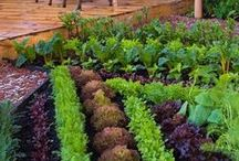Garden : Fruit , Herb, Vegetable, non decorative raised beds and planters, trellis / by Lisa