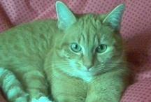 Our cat..Tijs