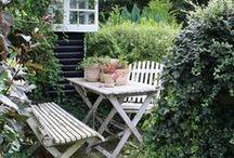 garden / by Dagmar Bleasdale {D's Home}