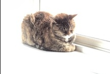 My Cats / The cats of www.gingerthecat.com
