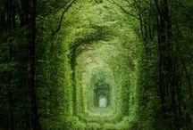 Oh wonderful nature