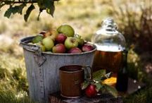 Autumn - Fall - Harvest Time / Decorating and Entertaining ideas for the fall  / by New England Fine Living