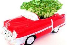 Microgreens & Home Gardens / microgreens, indoor gardening, urban gardening, miniature gardens / by Margaret Briggs