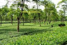 India Teas / #loosetea  #india #tea wholesale and retail from http://www.svtea.com