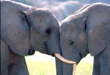 Olli & friends / Ik smelt voor kleine olifantjes, echt te lief. En ook de grote vind ik fantastisch. Ooit wil ik eens op een olifant zitten/rijden. Maar het lijkt me ook doodeng.