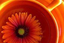 Orange Crush~Apricot~Tangerine / Excitement~Energetic~Motivation~Rejuvenation