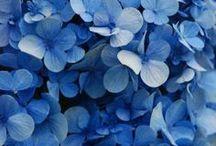 Colour - Blue / by Dagny Vaughn