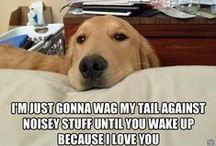 Puppies & Dogs / I love dogs.  I am mommy to my furbaby and I just love dogs and puppies.