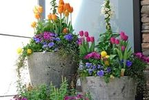 Container Gardening / by Kathy Tutor