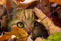 Cats, Cats, Cats / by Susan Taylor