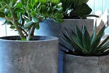 Container Garden / Put it in a pot