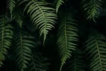 viridiplantae / This board is all about botanical lusciousness, about the nature of being a plant.  Big floppy leaves, soft and feathery ferns, abundance, and quiet solitude.