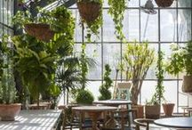 greenhouses + sunporches / Who doesn't want a personal greenhouse to spend long afternoons potting up seedlings or brightening up a winter morning with a cup of coffee among orchids?  I don't know such a person.