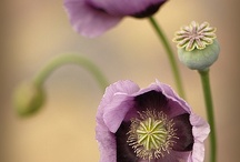 Flowers / by Sasha Si