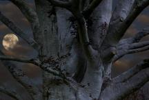 trees / by Sasha Si