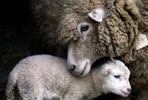 Wooly Wednesday  / by Sarah Elana