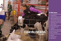 DairyBusiness Weekly / by HolsteinWorld DairyBusiness