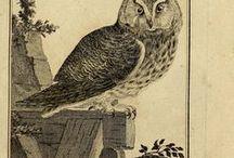 Natural history and botanical illustrations