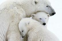 <3 Hippos and Polar Bears <3 / My fav animals!