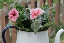 Garden~~~Annuals / by Linda Kullman