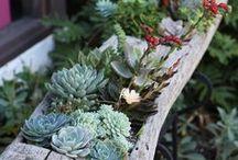 Getting Creative / Creative ideas for interesting gardens.
