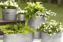 Aromatic Herbs / all about garden