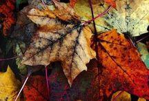 Autumn&Halloween / Favorite