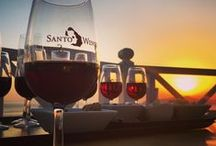 Wine Tours in Santorini / oin this signature Santorini tour and explore the magic world of the Therian wines. Enjoy an exquisite tasting experience under the guidance of an experienced sommelier, and embark on a tour you will always remember. Read more here: http://goo.gl/LyFpjS