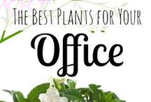 Cubicle & Office Decor / Tips on the design/organization/tools/decor that you have in your cubicle or office.
