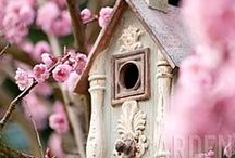 *~Songbird Motel~* / For the love of birds...A BOKEH board full of SONGBIRDS IN TREES, and where they LIVE...Happy Singing!