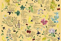 Health & Herbs