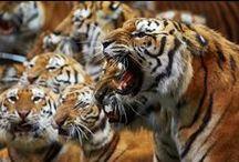 Animals of Russia