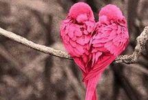 .Pink <3. / by Tanya May