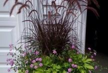 Plants / by Rhonda Prewett Stewart