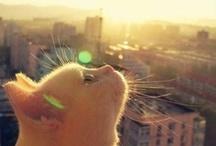 Cat & cute