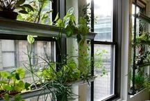 My Apartment Garden / by Misty Hill