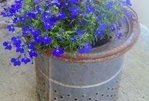 Gardening Projects / Gardening Ideas