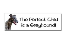 Greyhounds! Is there ANY other Dog? / by Thom Abbott Midtown Atlanta Real Estate