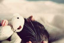 Cute Animals / Duh