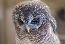 Owls / by Jennifer Baker