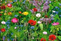 Flowers / Just flowers, nothing else
