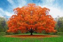 Autumn Beauty / by Sheila Knight