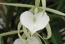 Orchids / by Jennifer Baker
