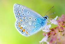 Butterflies / Metamorphosis, Magic, Fluttering About