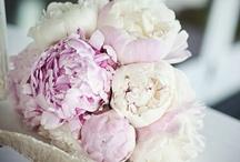 Flower Frenzee