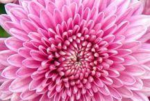 Flowers | Foliage / Beautiful Blooms & Greens