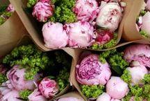 Flowers & herbs / by Amanda Reynés