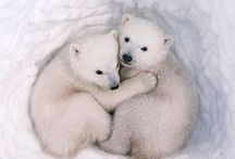 Polar Bears / Great White North | My Animal Spirit